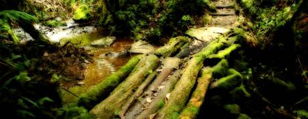 Biotopo del Quetzal en Baja Verapaz