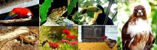 Animales de Guatemala