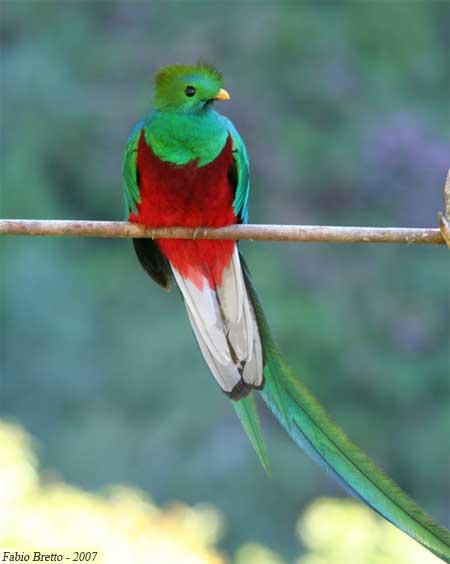 El Quetzal, Ave Nacional de Guatemala que habita en el Biotopo de Baja Verapaz.