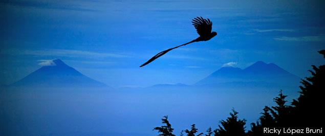 Quetzal en Guatemala. Fotografía por Ricky López Bruni.